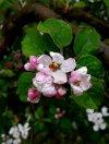 photo_2021-04-12_09-33-36.jpg