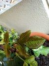 PicsArt_05-05-07.41.32.jpg
