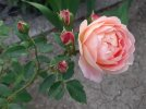 LoS_210609.jpg