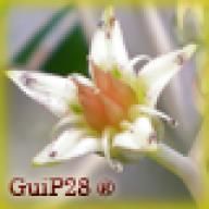 GuiP28