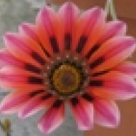 Patrizia Flora