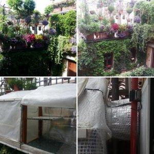 forum.giardinaggio.it