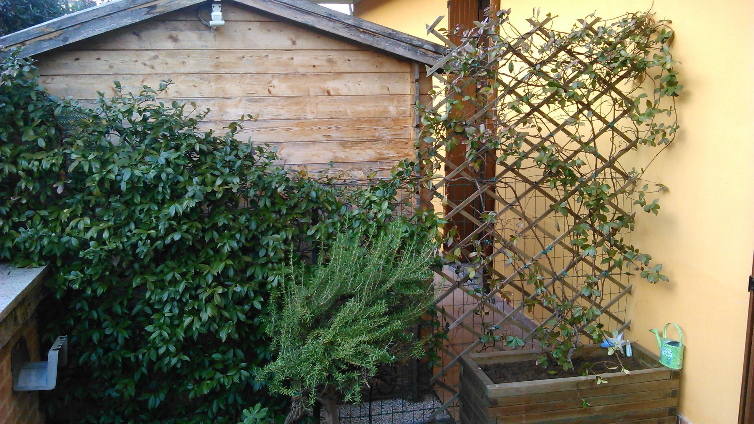 Rampicanti Adatti In Vaso gelsomino (in vaso) perde le foglie!! | forum di giardinaggio.it
